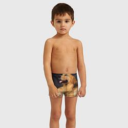 Плавки для мальчика Золотистый ретривер цвета 3D — фото 2